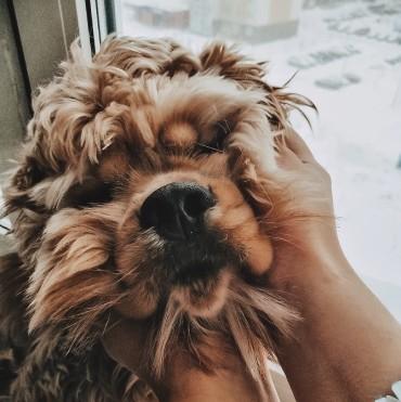 Перелет с собакой