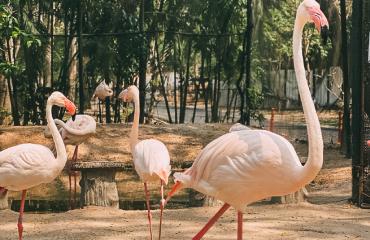 отели с фламинго в доминикане